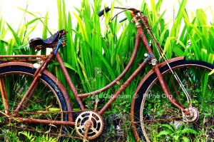 Feel the Rust: 1st Place - Zer Cabatuan